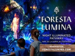 Foresta Lumina Package